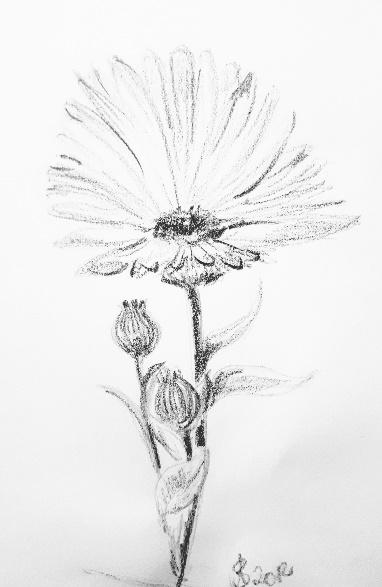 Kurs Natur Zeichnen