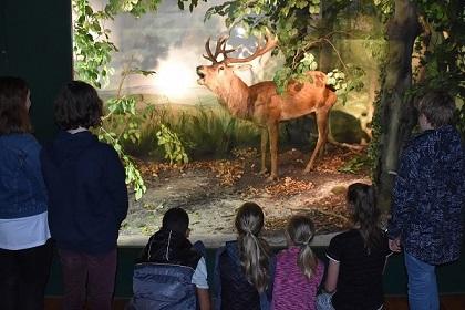 Ferienangebot: Wolf, Uhu und Co. – unsere Tierwelt verändert sich
