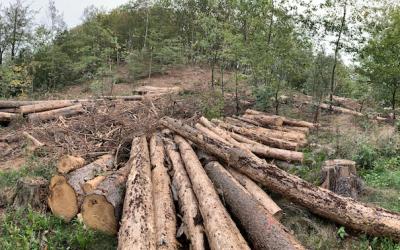 Wir retten unseren Wald.